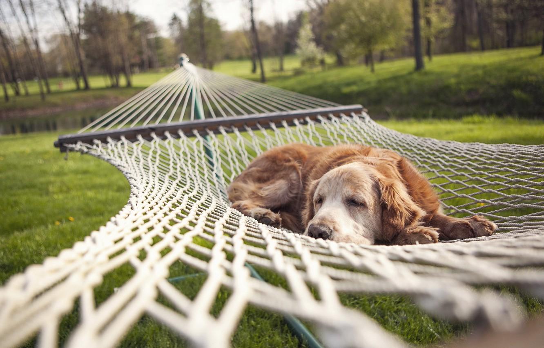 Photo wallpaper summer, dog, hammock