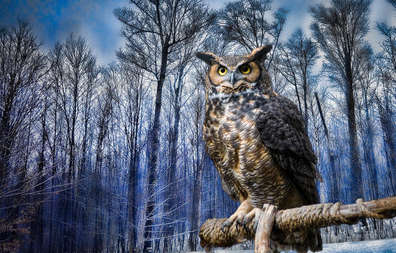 Photo wallpaper winter, trees, owl, bird, owl, Virgin Filin