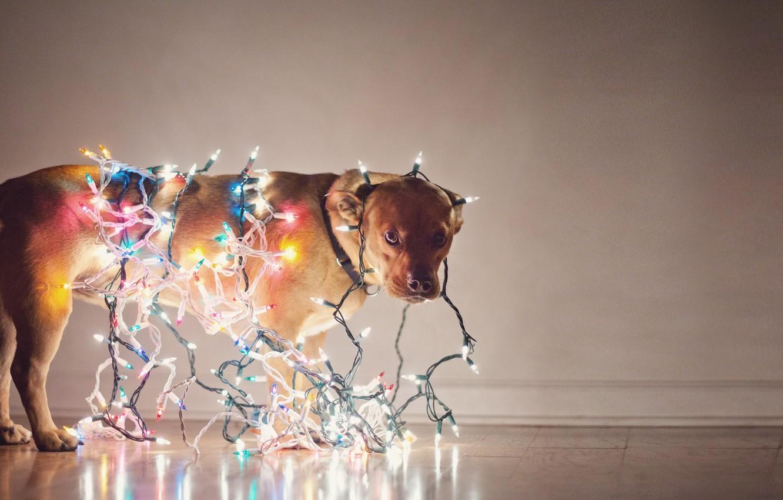 Photo wallpaper holiday, dog, garland, light bulb