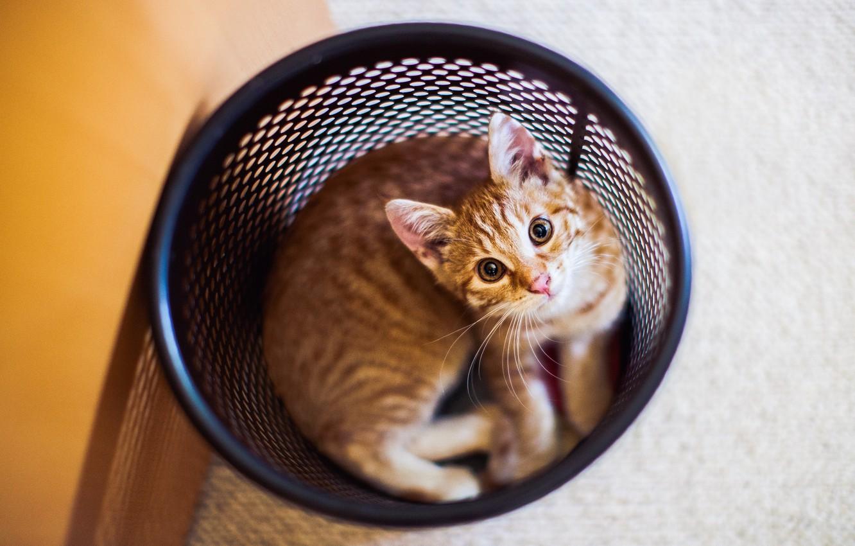 Photo wallpaper cat, kitty, wool, looks
