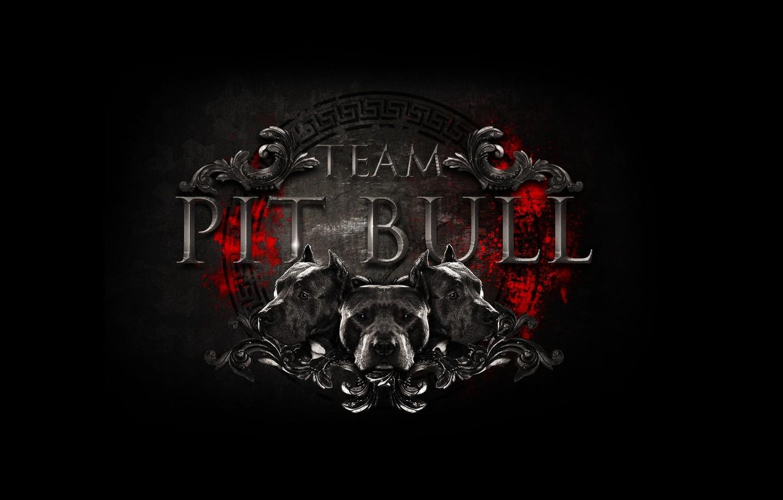Photo wallpaper logo, logo, team, logo, fight club, mma, mixed martial arts, mixed martial arts, team pit …