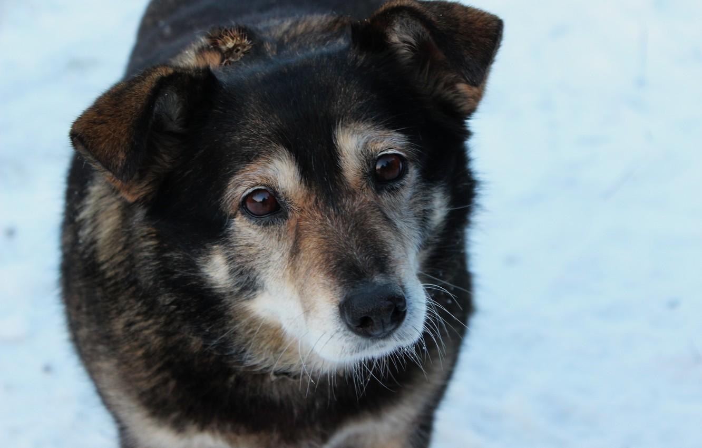 Photo wallpaper dog, mongrel, sad look