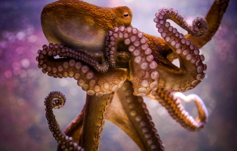 Photo wallpaper octopus, tentacles, sucker