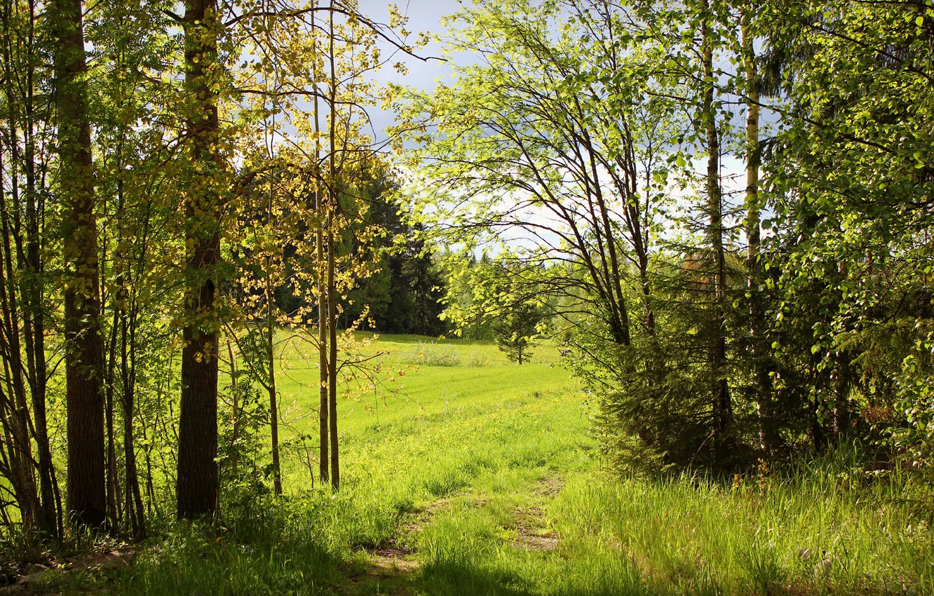 Photo wallpaper greens, forest, summer, trees, nature, Sunny, path