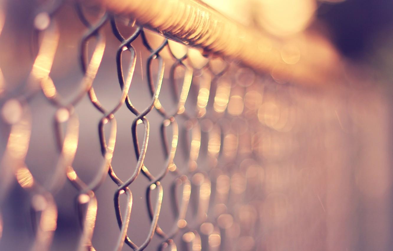Photo wallpaper macro, heat, mesh, the fence, netting
