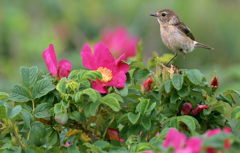Photo wallpaper Flowers, Bird, Leaves