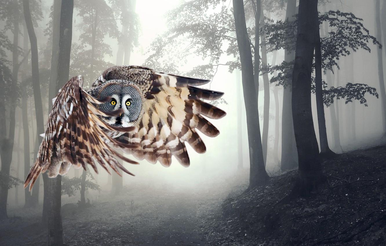 Photo wallpaper flight, owl, wings
