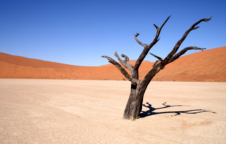 Photo wallpaper sand, the sky, landscape, tree, the wind, desert