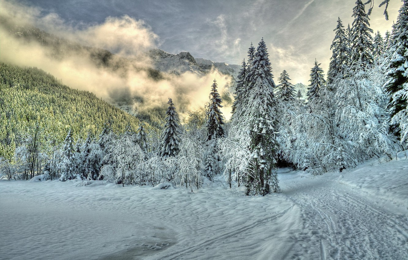 Photo wallpaper winter, forest, clouds, snow, trees, mountains, nature, fog, trail