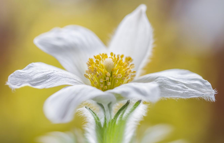 Photo wallpaper flower, nature, petals, sleep-grass