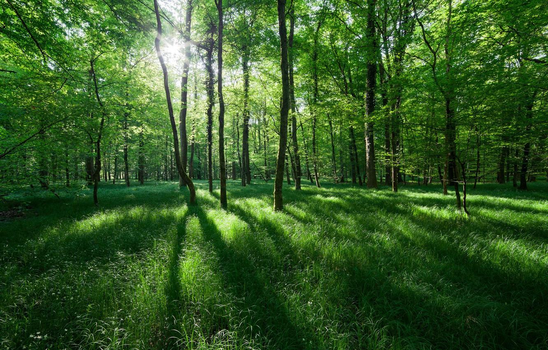 Photo wallpaper grass, the sun, light, trees, nature, Spring