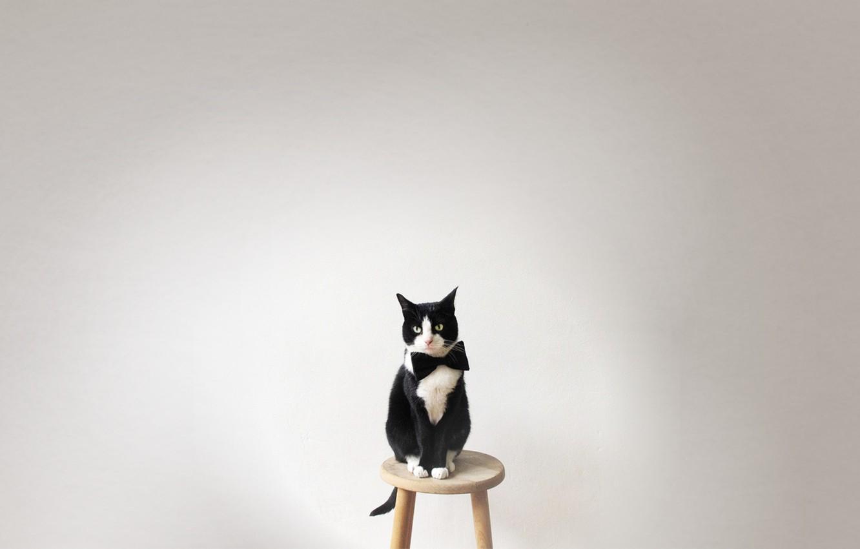 Photo wallpaper animals, cat, look, butterfly, Koshak, chair, tie