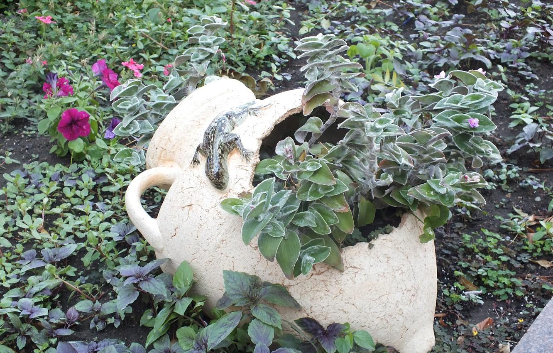 Photo wallpaper flowers, lizard, pitcher