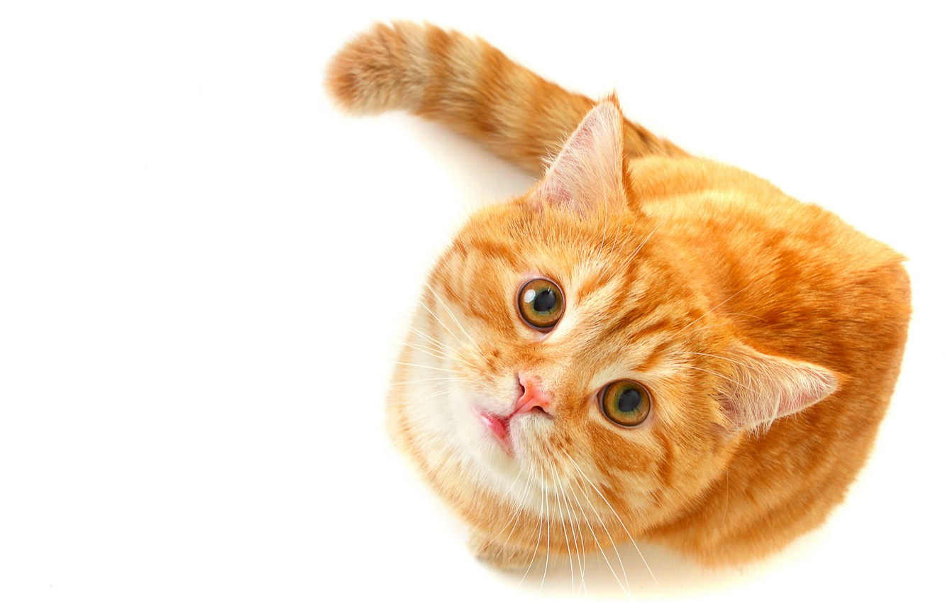 Photo wallpaper cat, eyes, cat, look, red, green, white background, looks