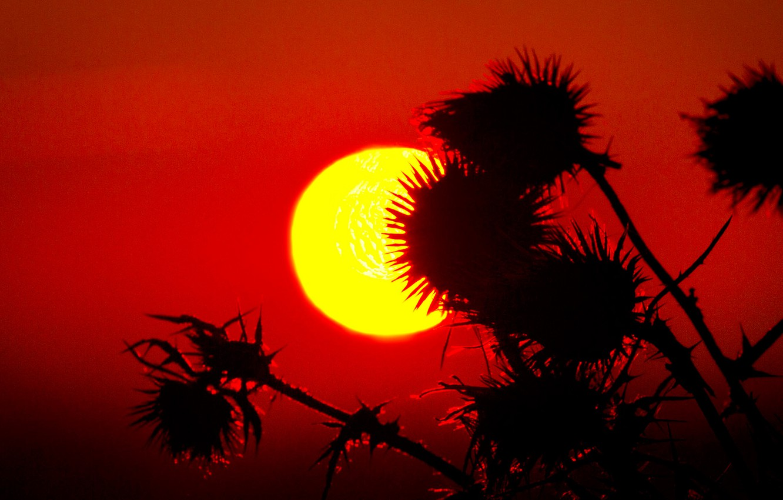 Photo wallpaper the sky, the sun, macro, sunset, plant, silhouette