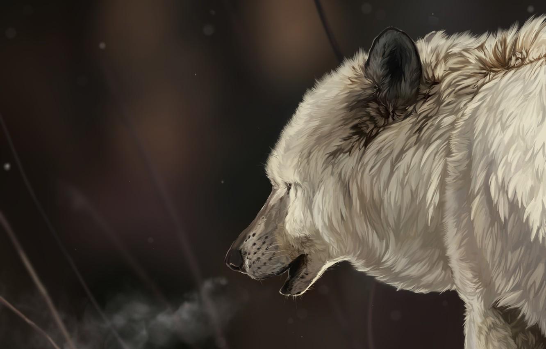 Photo wallpaper winter, white, face, snow, snowflakes, wolf, head, art, fur
