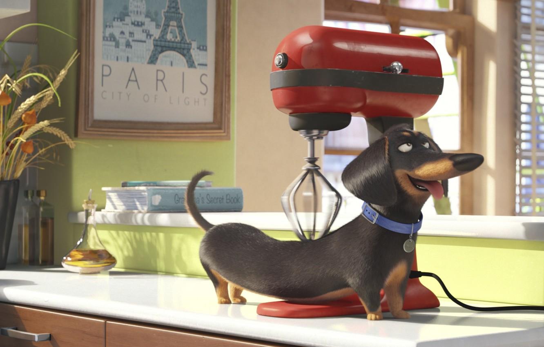 Photo wallpaper apple, cinema, Paris, dog, cup, cartoon, fruit, movie, window, animal, book, film, mixer, wheat, massage, …