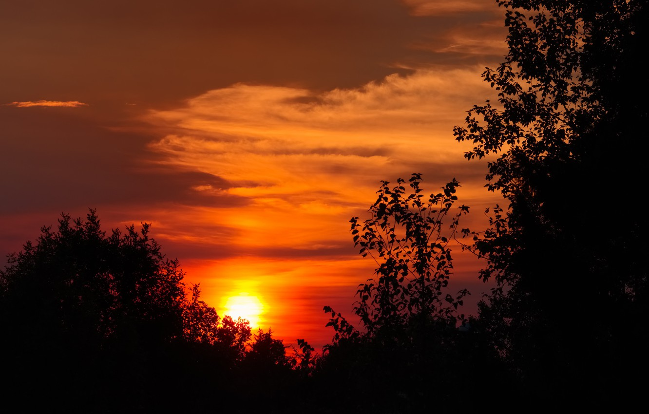 Photo wallpaper the sky, the sun, clouds, trees, sunset, silhouette, glow