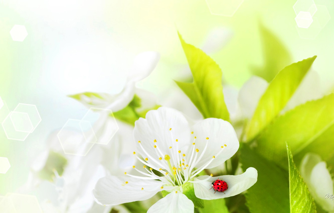 Photo wallpaper flower, ladybug, petals, insect