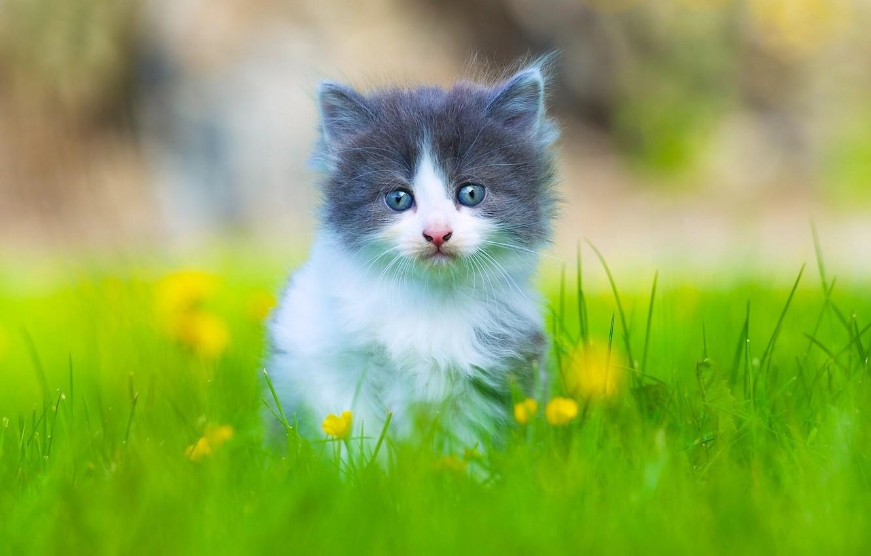 Photo wallpaper grass, look, baby, kitty