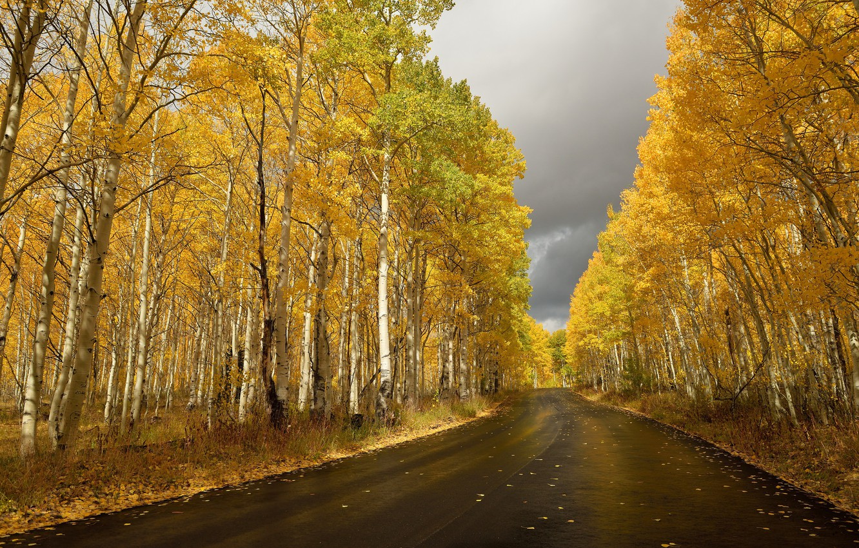 Photo wallpaper road, autumn, birch