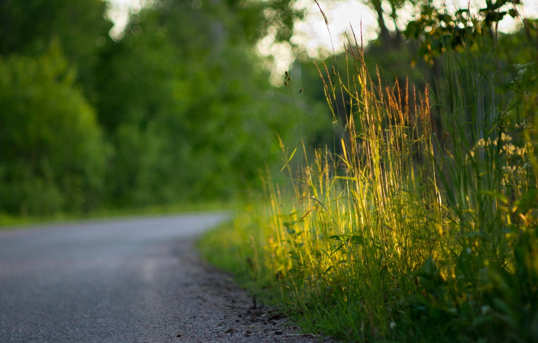 Photo wallpaper road, grass, macro