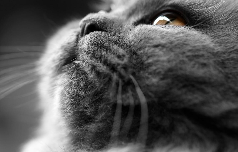 Photo wallpaper cat, cat, plush