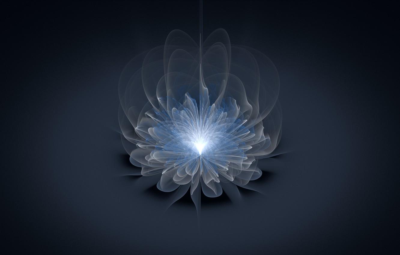 Photo wallpaper flower, light, line, grey background