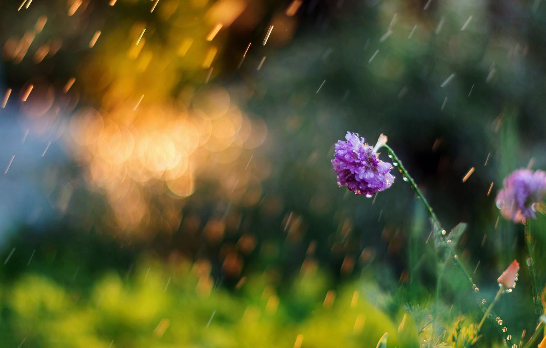 Photo wallpaper greens, flower, summer, flowers, nature, background, Wallpaper, blur, morning, meadow, day, wallpaper, nature, widescreen, flowers, …