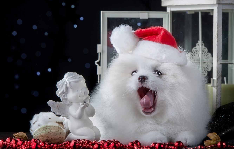 Photo wallpaper dog, beads, figurine, cap, angel, Spitz