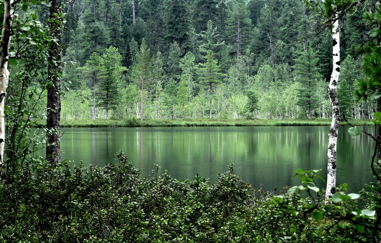 Photo wallpaper forest, summer, water, trees, nature, reflection, birch