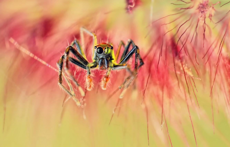 Photo wallpaper macro, spider, spider