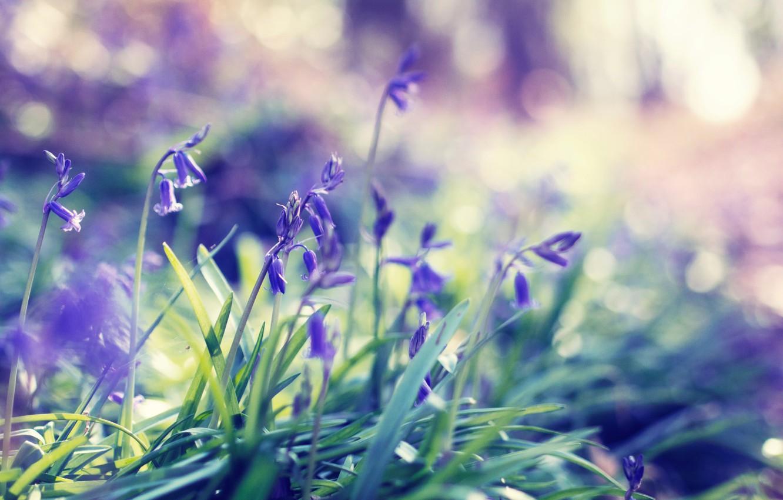 Photo wallpaper grass, flowers, spring, spring
