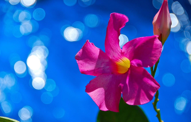 Photo wallpaper flower, nature, plant, petals, Blik