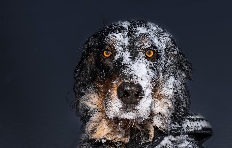 Photo wallpaper look, snow, each, dog