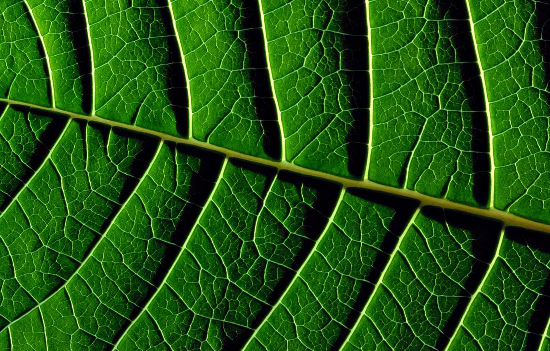 Photo wallpaper Greens, Leaves, Green, Texture, Green