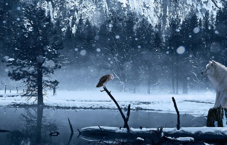 Photo wallpaper winter, snow, lake, owl, wolf, art