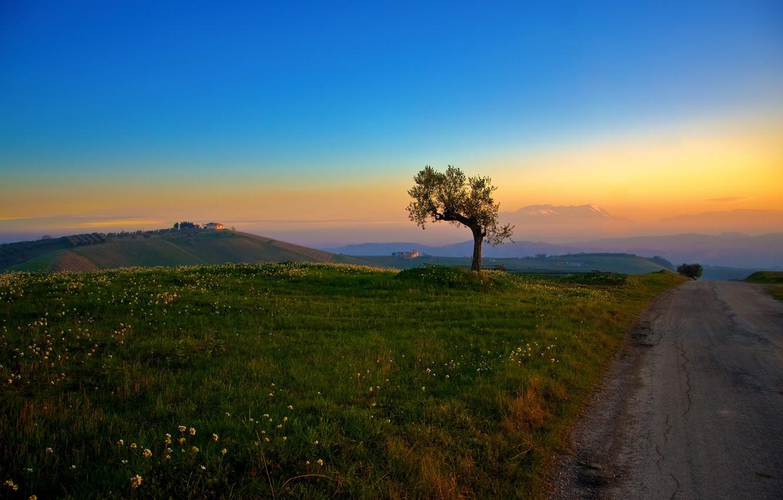 Photo wallpaper road, grass, tree, hills, morning