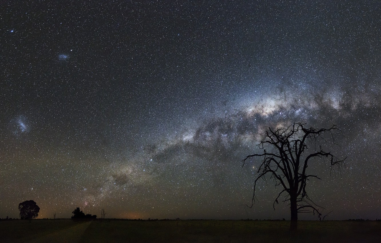 Photo wallpaper space, stars, trees, night, space, the milky way, silhouettes