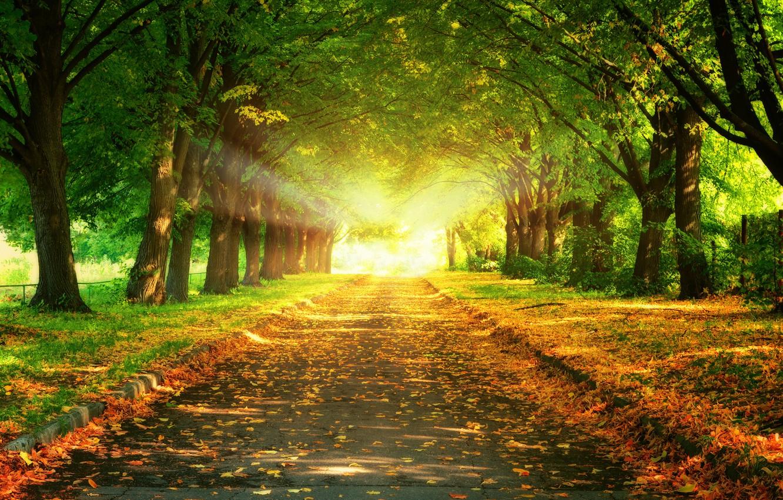 Photo wallpaper road, leaves, trees, landscape, sunset, nature, beautiful, road, trees, landscape, nature, sunset, beautiful, leaves, majestic, …