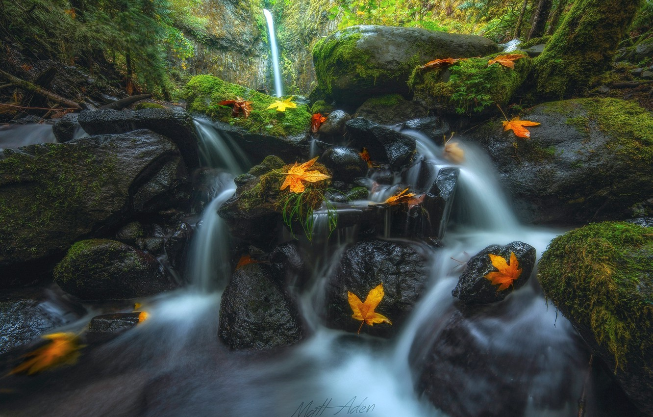 Photo wallpaper autumn, forest, nature, river, stream, stones, foliage, moss, threads