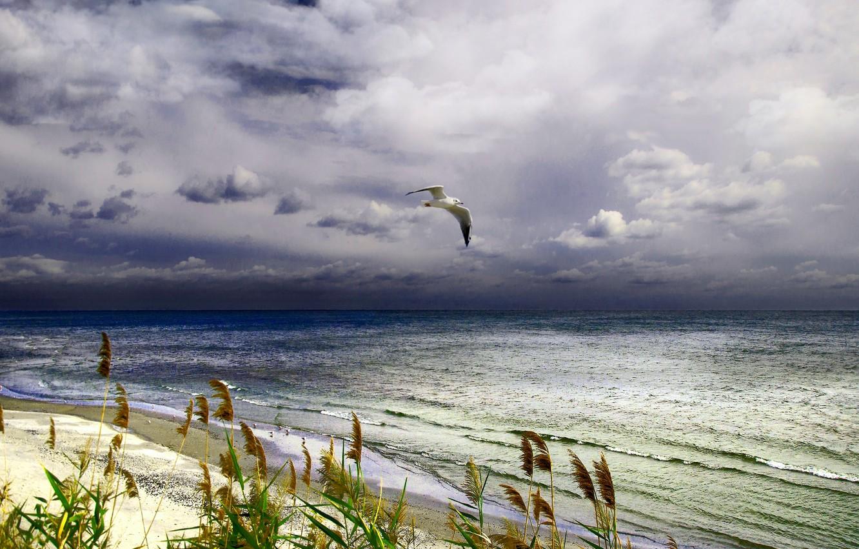 Photo wallpaper sea, Seagull, surf