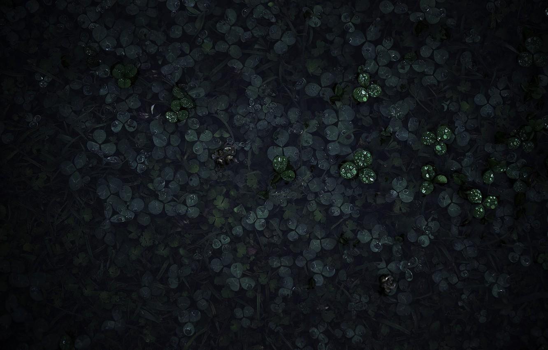 Photo wallpaper grass, drops, macro, Rosa, morning