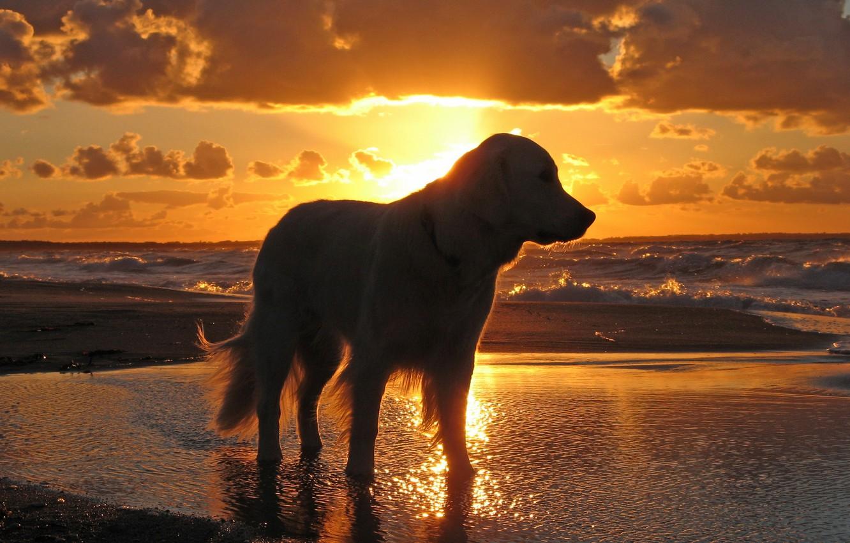 Photo wallpaper sea, the sky, water, sunset, dog