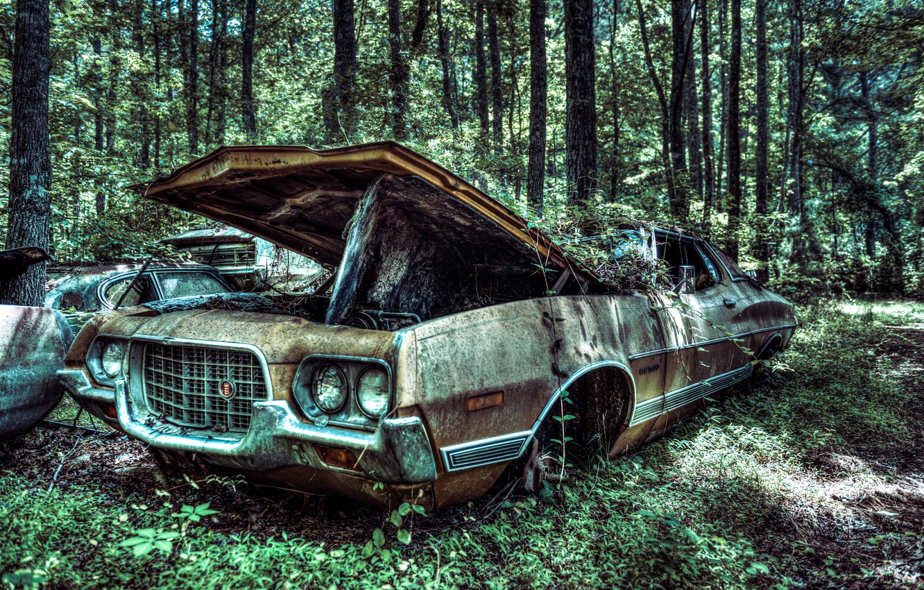 Photo wallpaper machine, forest, tree, Ford, old, forest, car, USA, tree, 1972, vehicle, old car, Gran Torino …