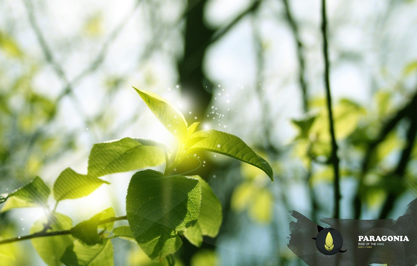 Photo wallpaper leaves, design, bright glowing things