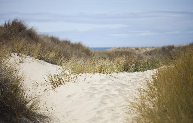Photo wallpaper sand, sea, the sky, grass, nature, dunes