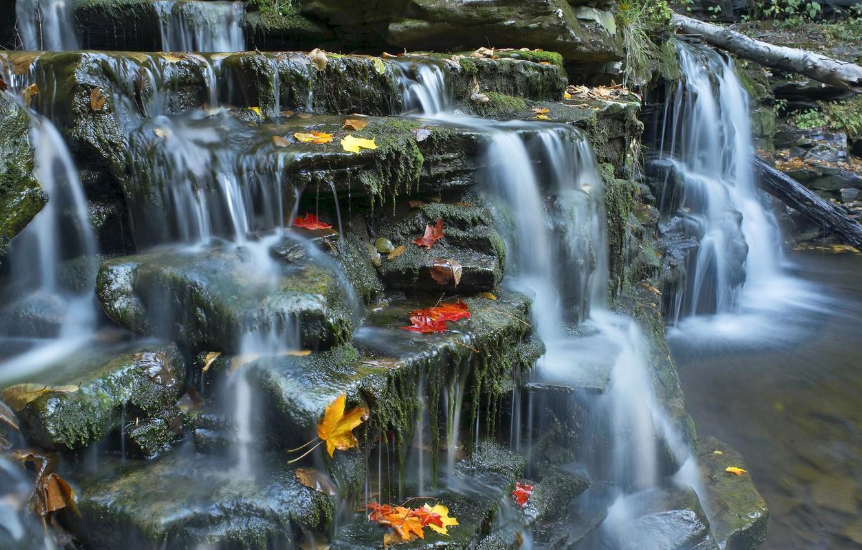 Photo wallpaper autumn, leaves, river, stream, stones, stream, cascade