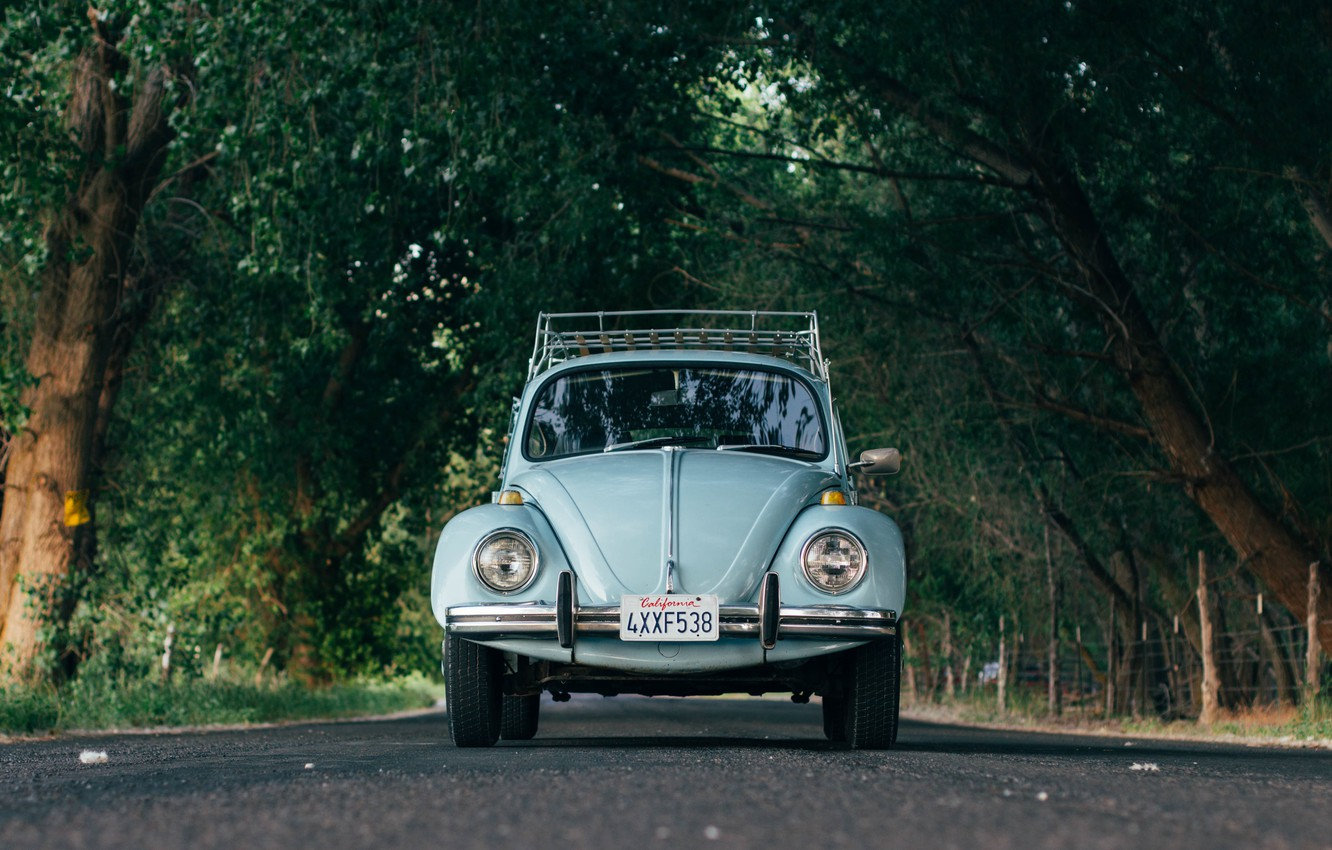 Photo wallpaper car, Volkswagen, road, trees, Beetle, Volkswagen Beetle