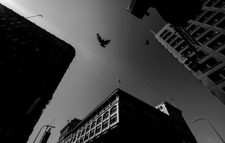 Photo wallpaper City, Sky, Wallpaper, Photo, Roof, Dove, Rinzi Ruiz, Black & White